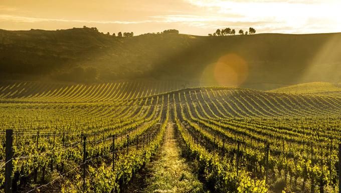 Pago de Carraovejas wineyards