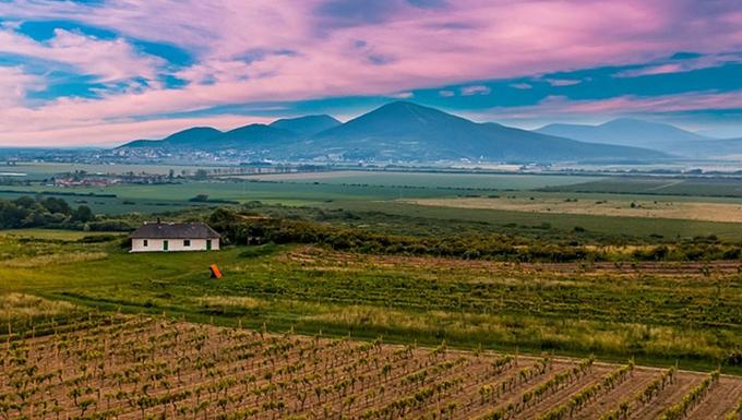 Wineyard in Hungary