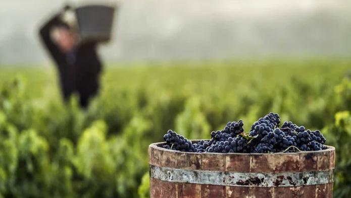 Nueva generación en la Rioja