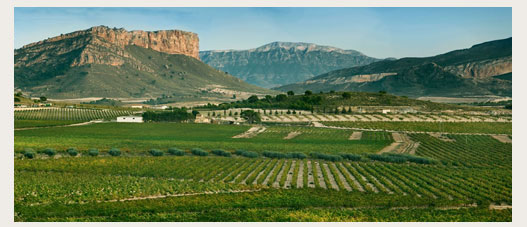 Juan Gil paisage de la bodega