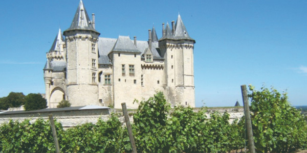 AOC Saumur-Champigny