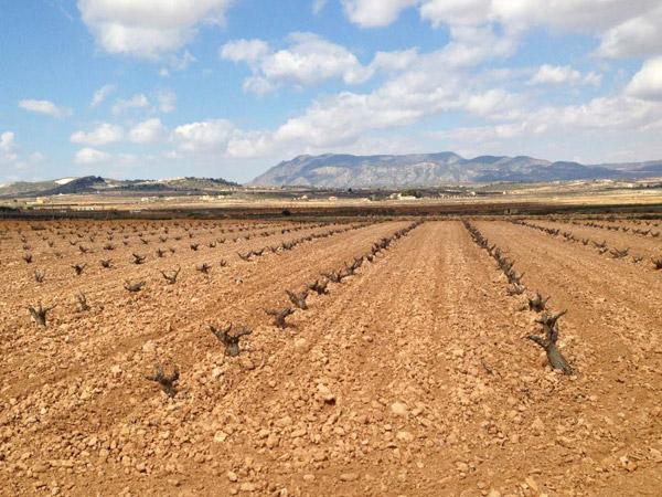 D.O. Alicante